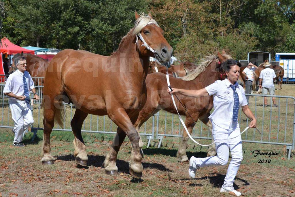 Fête du cheval à GRAULHET le 16 septembre 2018 - Concours Départemental de chevaux de traits - 34
