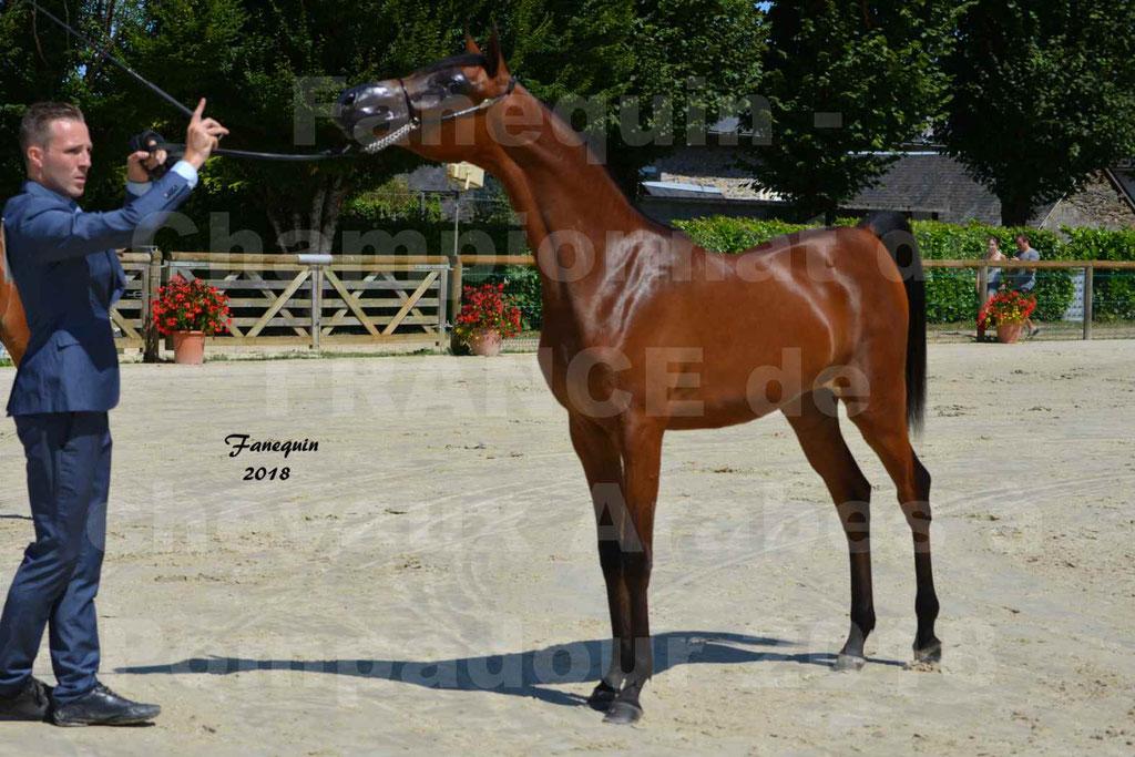 Championnat de FRANCE de chevaux Arabes à Pompadour en 2018 - BO AS ALEXANDRA - Notre Sélection - 14