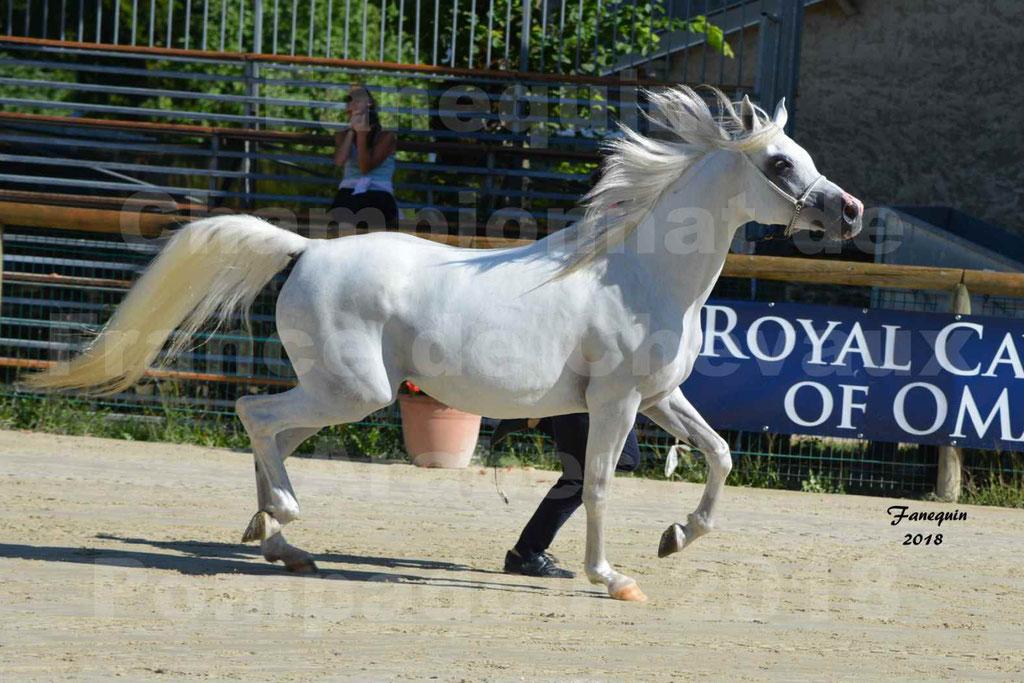 Championnat de FRANCE de chevaux Arabes à Pompadour en 2018 - ESTALIA - 21