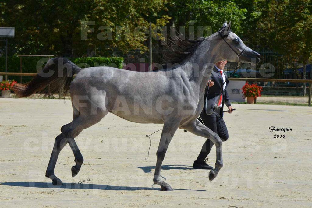 Championnat de FRANCE de chevaux Arabes à Pompadour en 2018 - SANIA DU CAYRON - Notre Sélection - 19