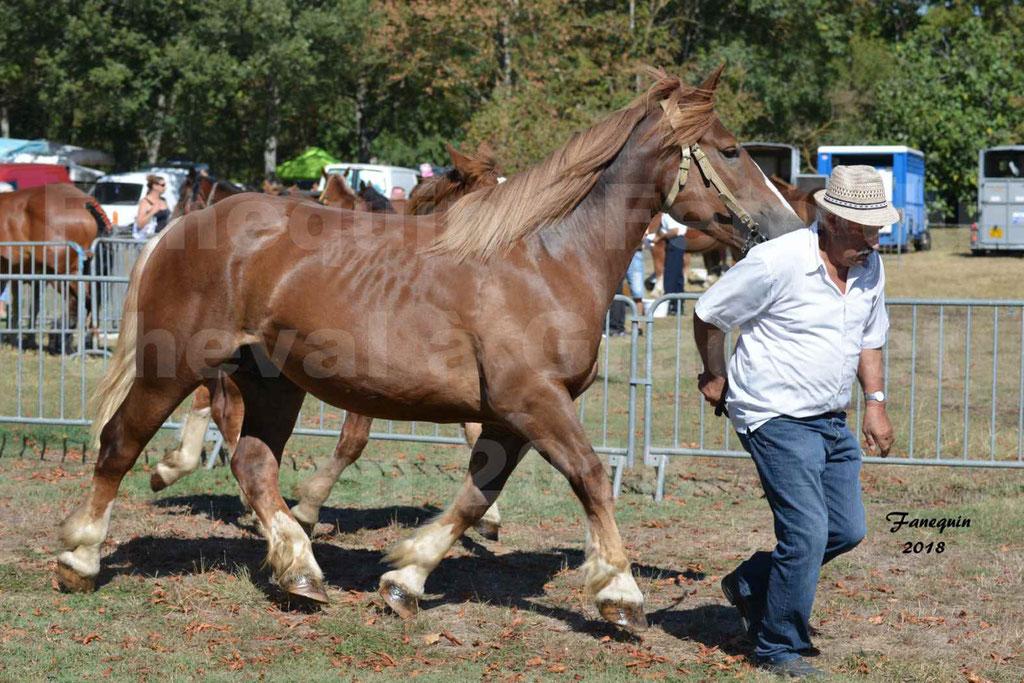 Fête du cheval à GRAULHET le 16 septembre 2018 - Concours Départemental de chevaux de traits - 23