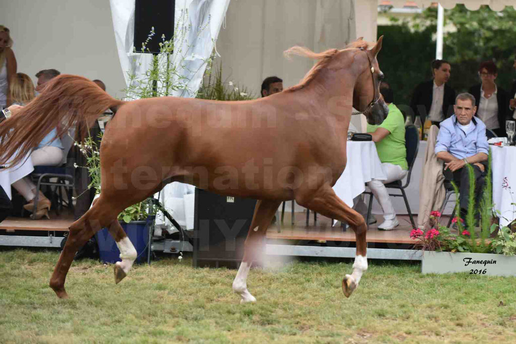 International Arabian Horse Show B de VICHY 2016 - DZHARI NUNKI - Notre Sélection - 14
