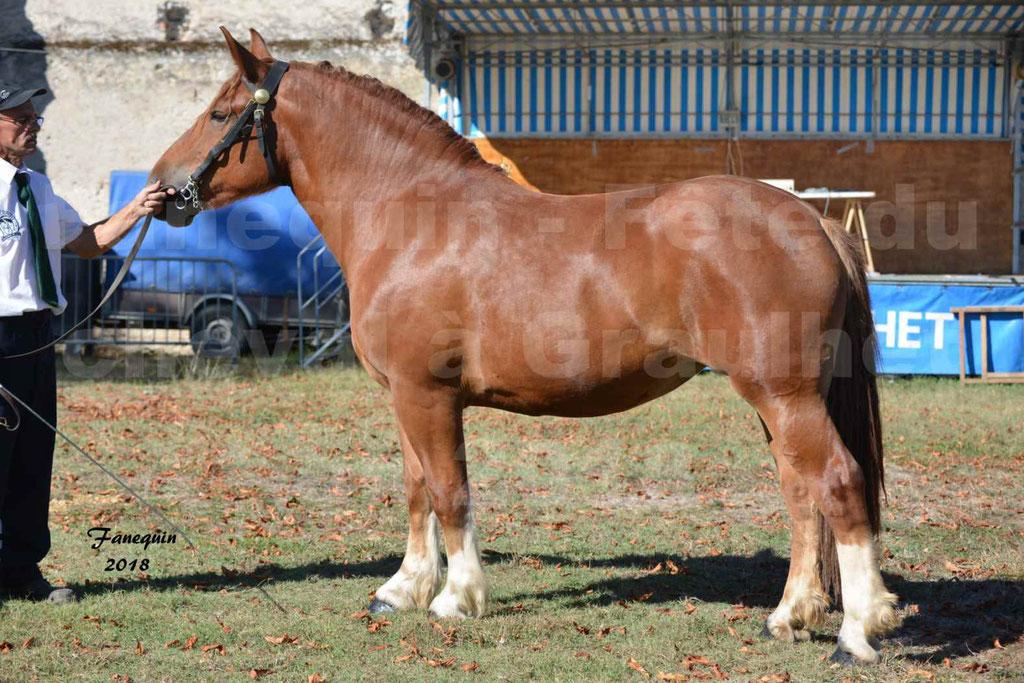 Fête du cheval à GRAULHET le 16 septembre 2018 - Concours Départemental de chevaux de traits - 03