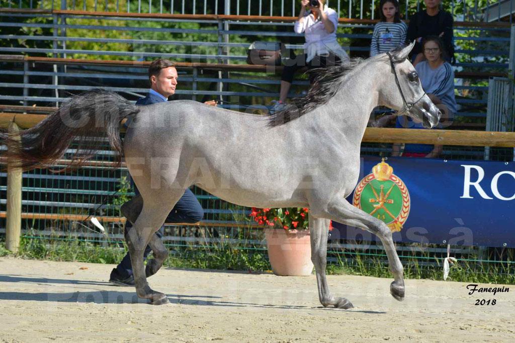 Championnat de FRANCE de chevaux Arabes à Pompadour en 2018 - SANIA DU CAYRON - Notre Sélection - 36