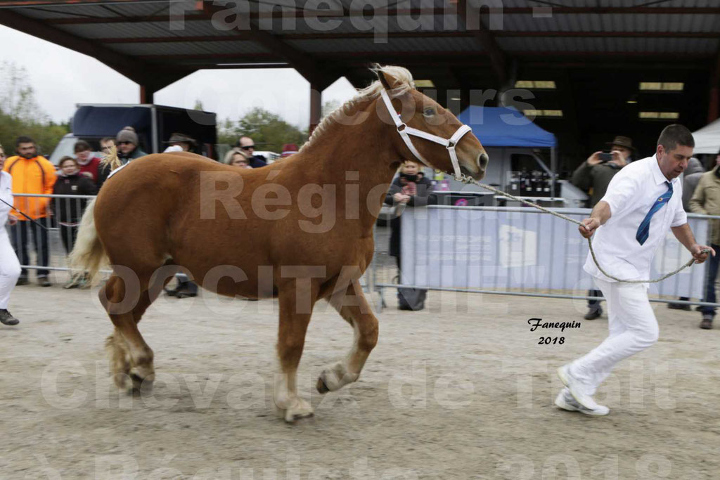"""Concours Régional """"OCCITANIE"""" de Chevaux de Traits à REQUISTA en 2018 - HIRONDELLE DU SOIR - 07"""