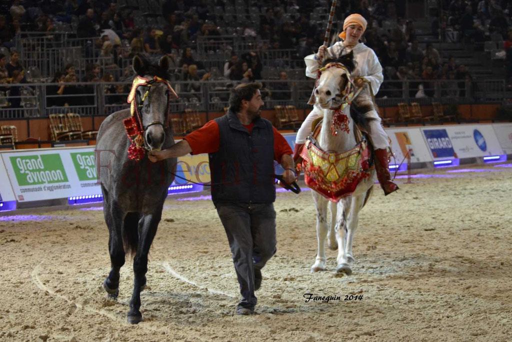 Show des races - Chevaux BARBE 16