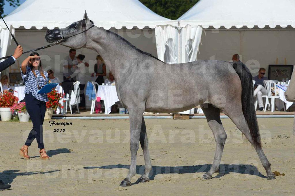 Championnat de FRANCE de chevaux Arabes à Pompadour en 2018 - SANIA DU CAYRON - Notre Sélection - 48