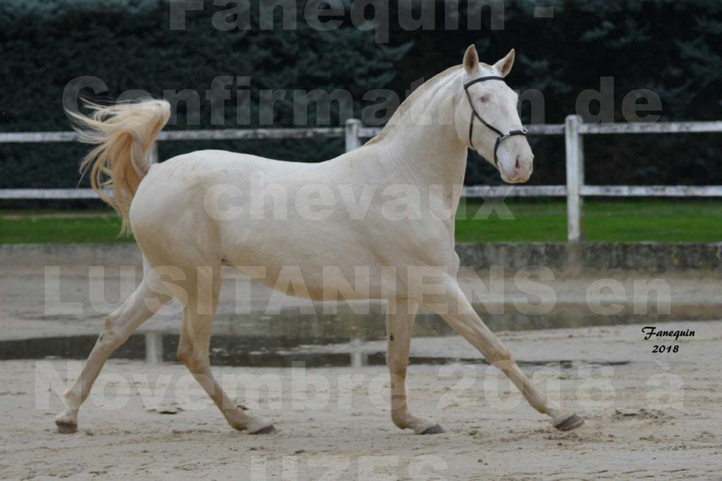 Confirmation de chevaux LUSITANIENS aux Haras d'UZES Novembre 2018 - LOLIBLOU - 22