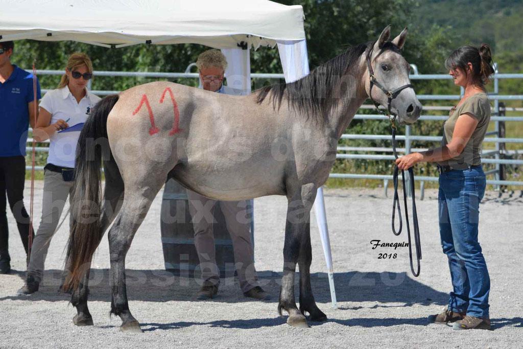 Concours d'Elevage de chevaux Arabes  le 27 juin 2018 à la BOISSIERE - GAZRAK D'AURIERES - 25