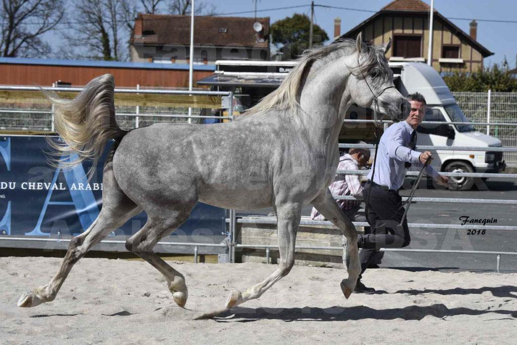 Concours d'élevage de Chevaux Arabes - Demi Sang Arabes - Anglo Arabes - ALBI les 6 & 7 Avril 2018 - SHAKEEL DE LAFON - Notre Sélection - 2