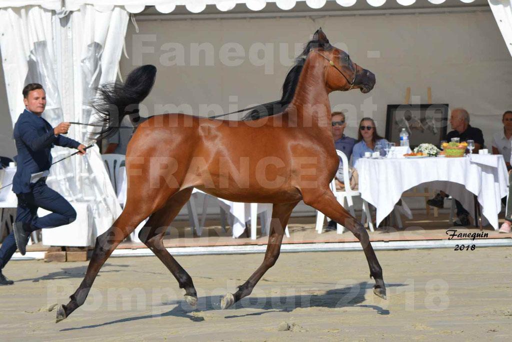 Championnat de FRANCE de chevaux Arabes à Pompadour en 2018 - BO AS ALEXANDRA - Notre Sélection - 21