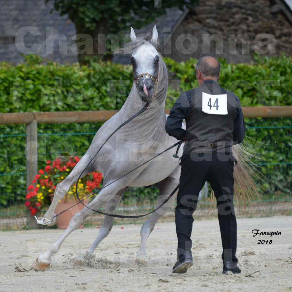 Championnat de FRANCE de chevaux Arabes à Pompadour en 2018 - SH CHAGALL - Notre Sélection - 11