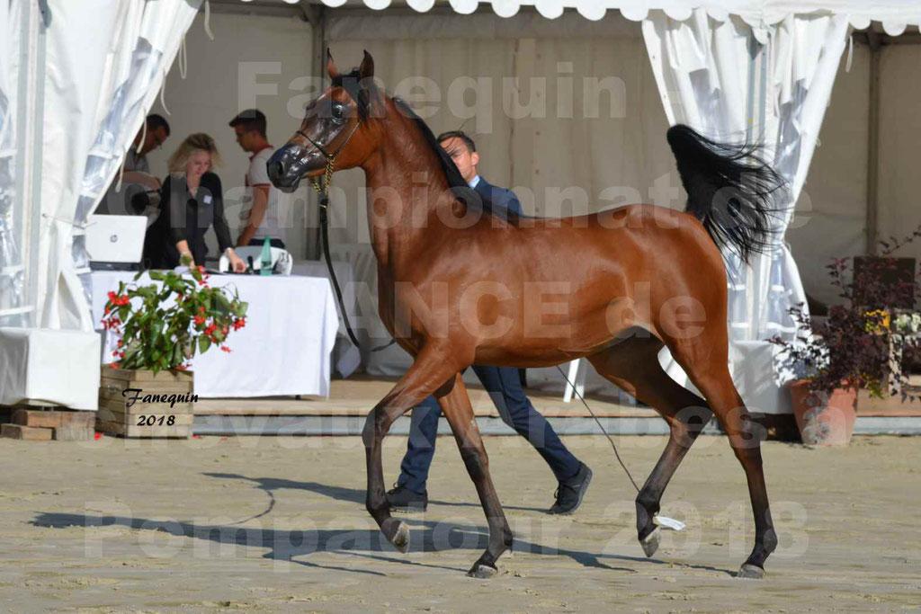 Championnat de FRANCE de chevaux Arabes à Pompadour en 2018 - BO AS ALEXANDRA - Notre Sélection - 24