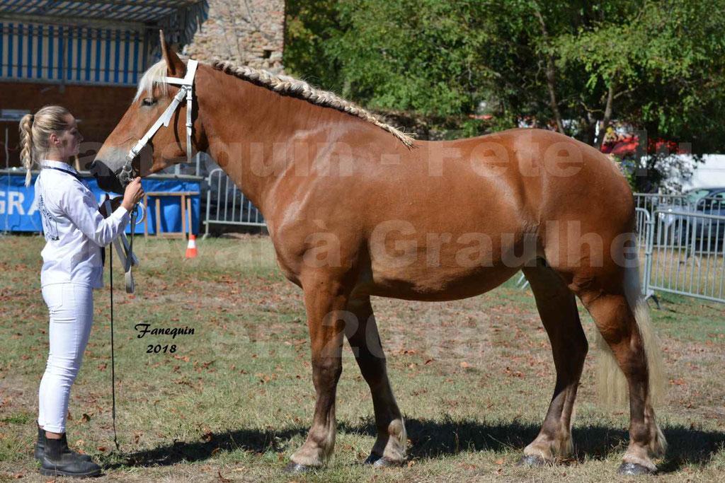 Fête du cheval à GRAULHET le 16 septembre 2018 - Concours Départemental de chevaux de traits - 15