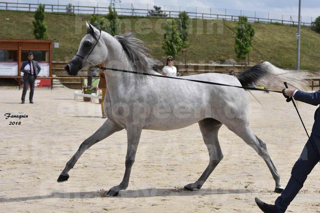 Concours Européen de chevaux Arabes à Chazey sur Ain 2018 - FATIN ALBIDAYER - Notre Sélection - 06
