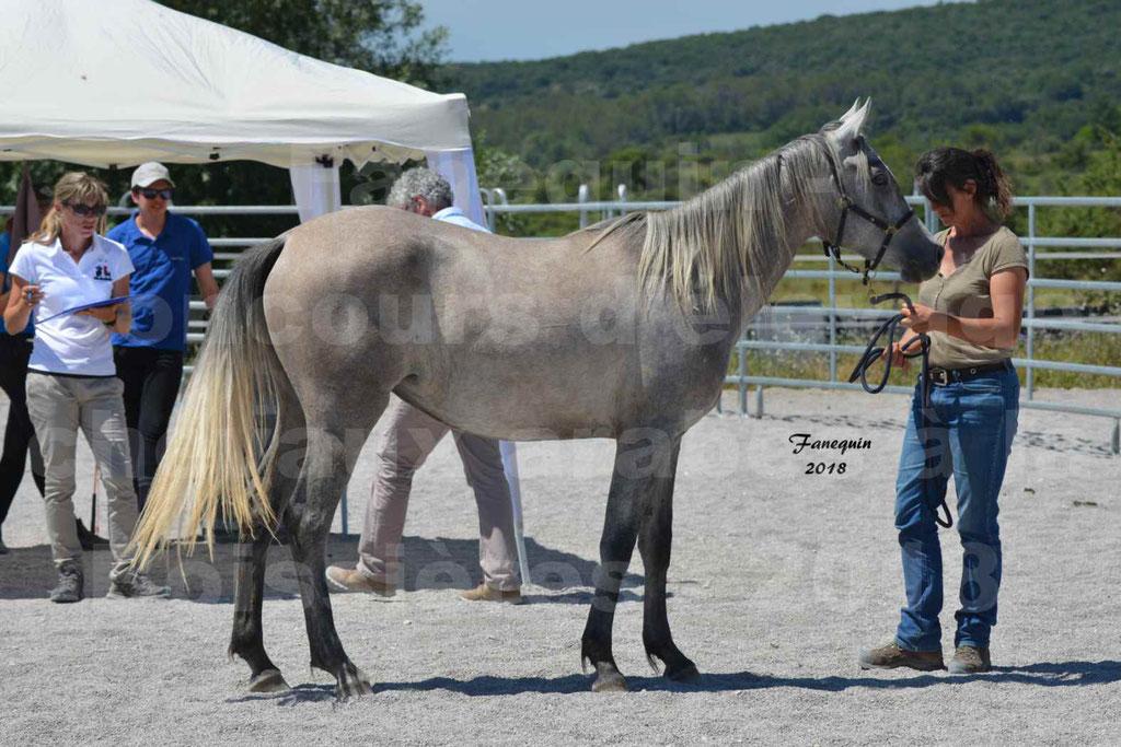 Concours d'Elevage de chevaux Arabes  le 27 juin 2018 à la BOISSIERE - GAZAK D'AURIERES - 23