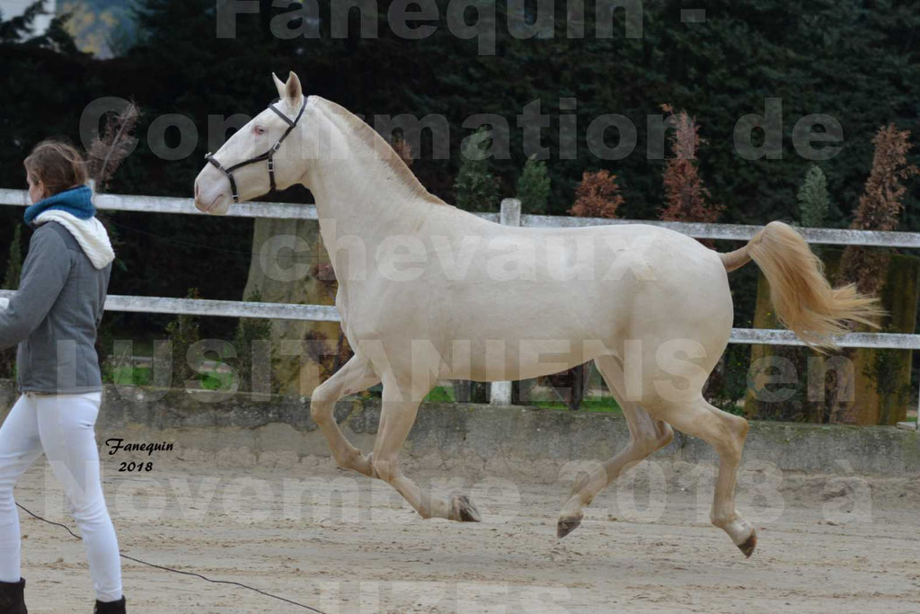 Confirmation de chevaux LUSITANIENS aux Haras d'UZES Novembre 2018 - LOLIBLOU - 09