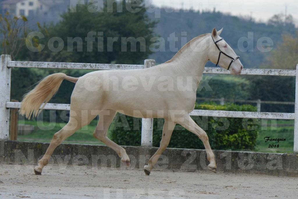 Confirmation de chevaux LUSITANIENS aux Haras d'UZES Novembre 2018 - LOLIBLOU - 30