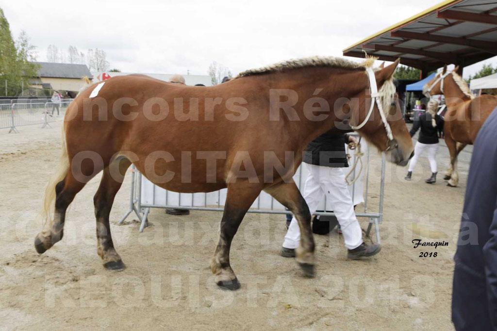 """Concours Régional """"OCCITANIE"""" Modèles et Allures de chevaux de trait à REQUISTA en 2018 - PORTRAITS - 20"""