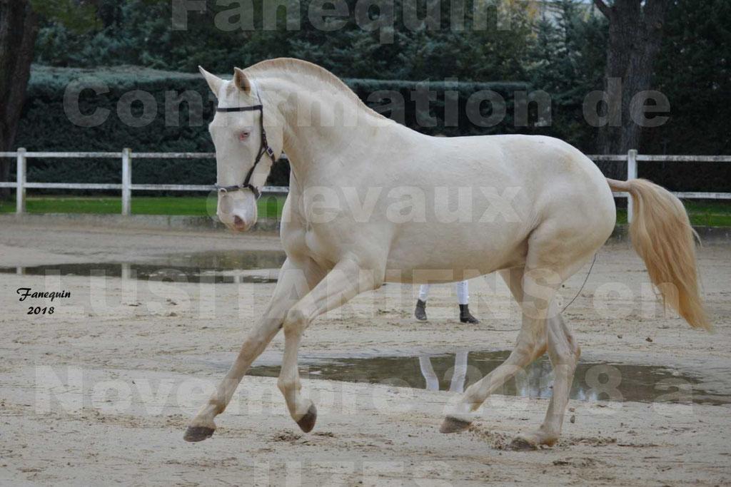 Confirmation de chevaux LUSITANIENS aux Haras d'UZES Novembre 2018 - LOLIBLOU - 25