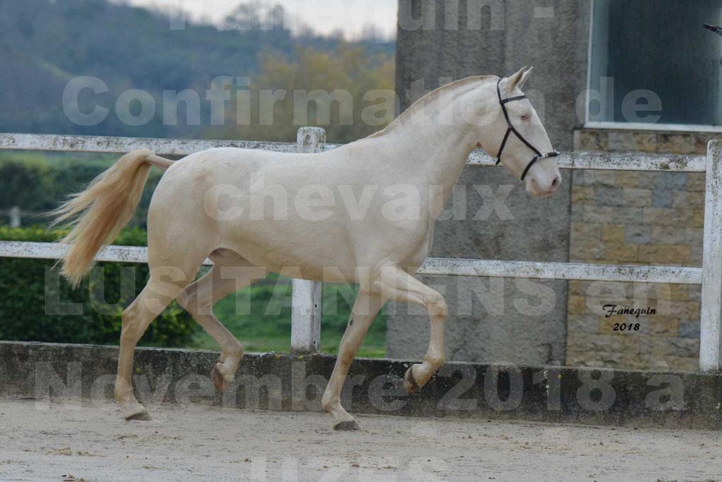 Confirmation de chevaux LUSITANIENS aux Haras d'UZES Novembre 2018 - LOLIBLOU - 31