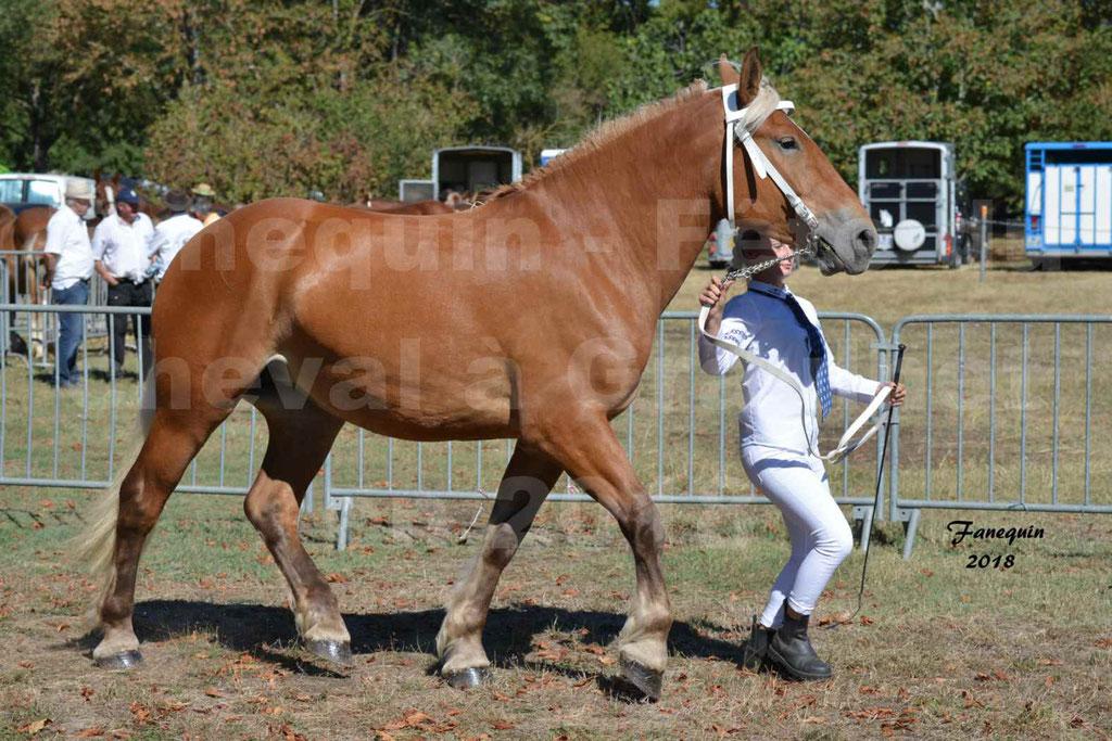 Fête du cheval à GRAULHET le 16 septembre 2018 - Concours Départemental de chevaux de traits - 2