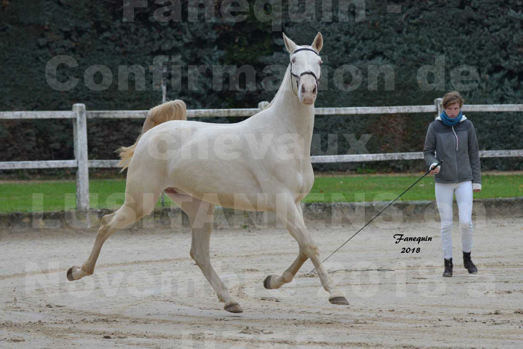 Confirmation de chevaux LUSITANIENS aux Haras d'UZES Novembre 2018 - LOLIBLOU - 19