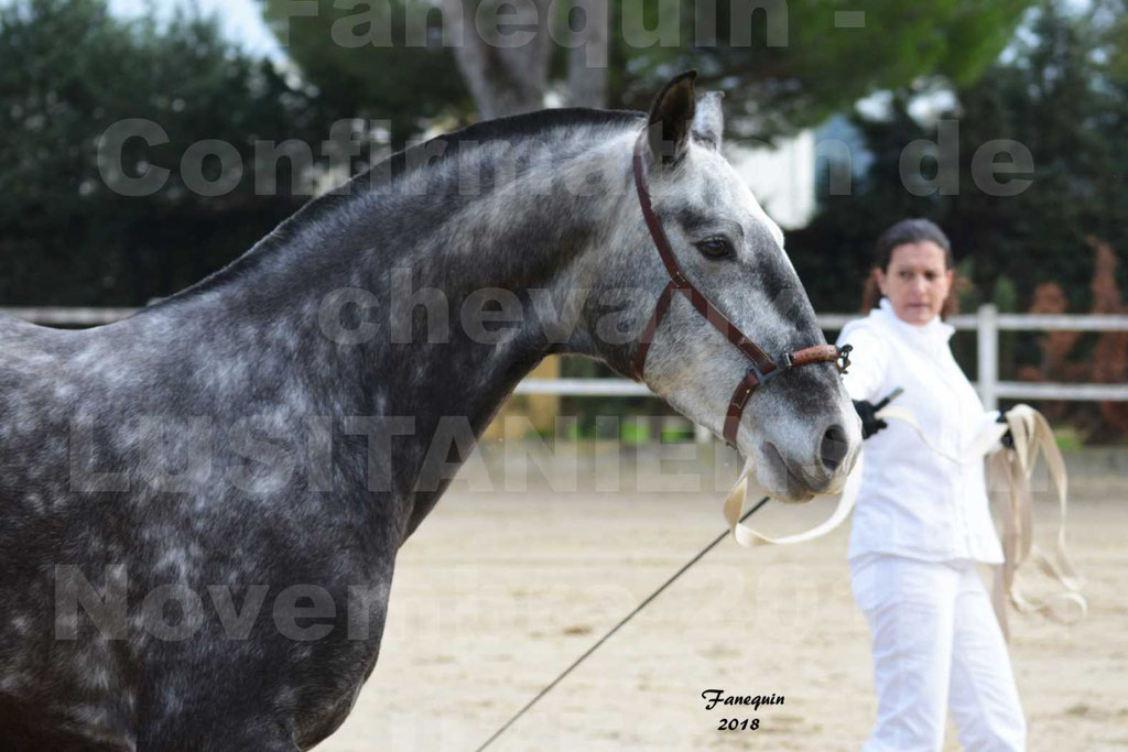 Confirmation de chevaux LUSITANIENS aux Haras d'UZES Novembre 2018 - JOYAS - Portraits - 2