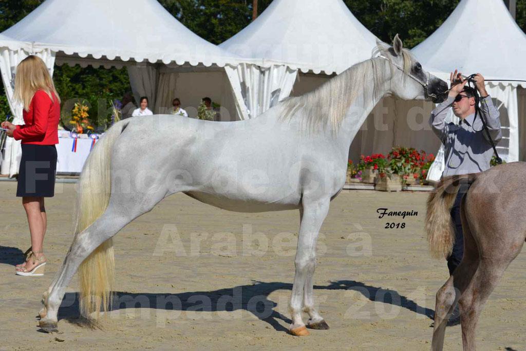 Championnat de FRANCE de chevaux Arabes à Pompadour en 2018 - ESTALIA - 38