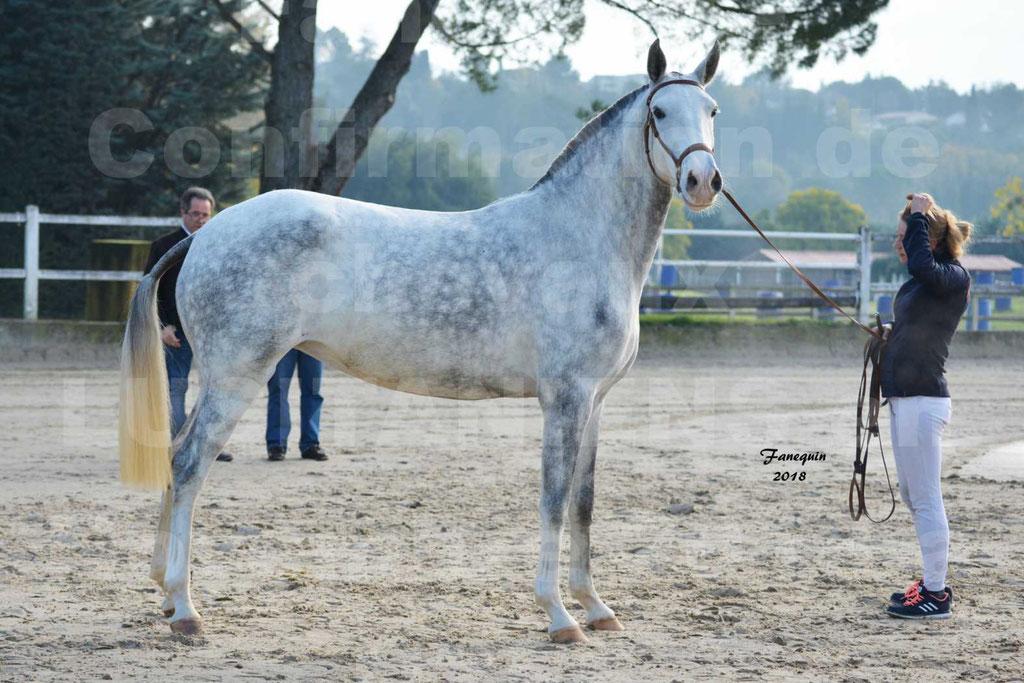 Confirmation de chevaux LUSITANIENS aux Haras d'UZES Novembre 2018 - LUTECE DU CASTEL - 25