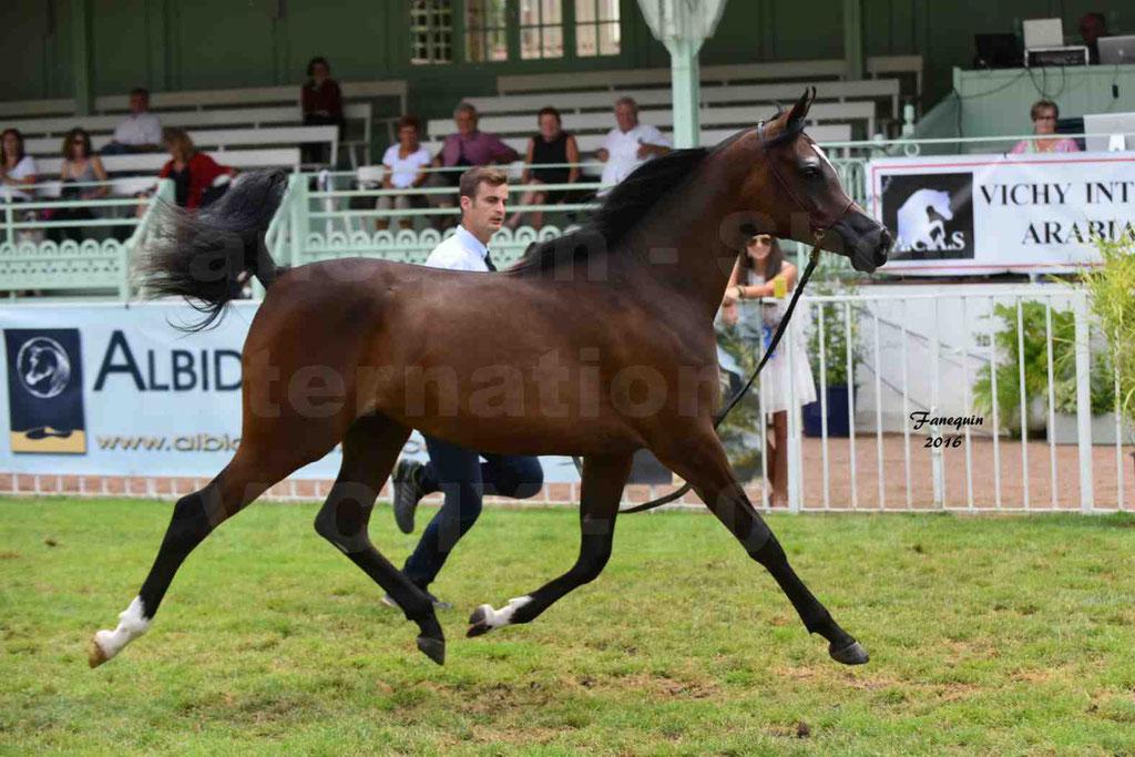 International Arabian Horse Show B de VICHY 2016 - ESMAELIA AL HEVAN - Notre Sélection - 12