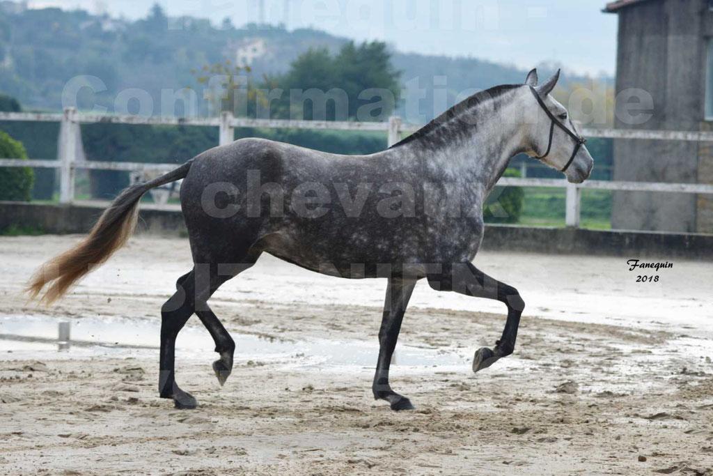 Confirmation de chevaux LUSITANIENS aux Haras d'UZES Novembre 2018 - JAVA DO REAL - 17
