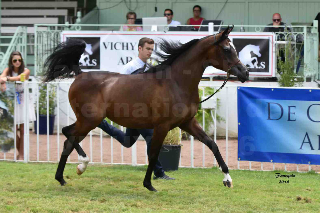 International Arabian Horse Show B de VICHY 2016 - ESMAELIA AL HEVAN - Notre Sélection - 07