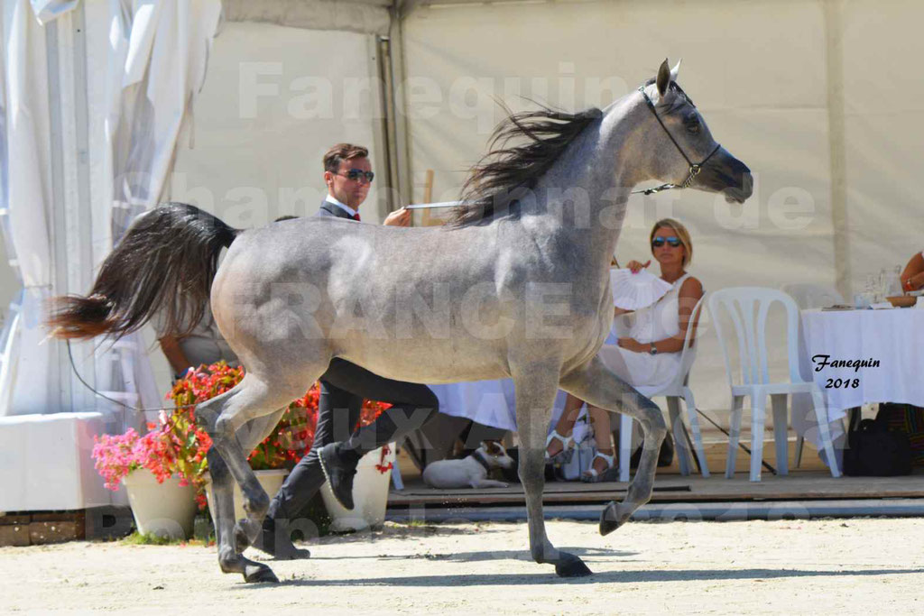 Championnat de FRANCE de chevaux Arabes à Pompadour en 2018 - SANIA DU CAYRON - Notre Sélection - 05