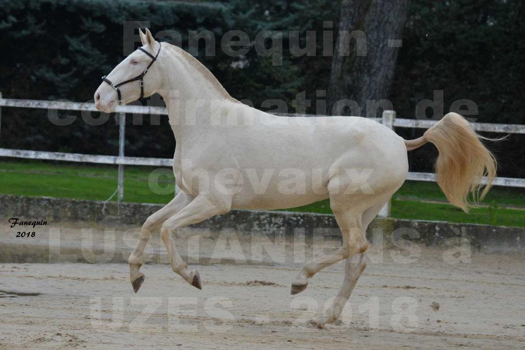 Confirmation de chevaux LUSITANIENS aux Haras d'UZES Novembre 2018 - LOLIBLOU - 10