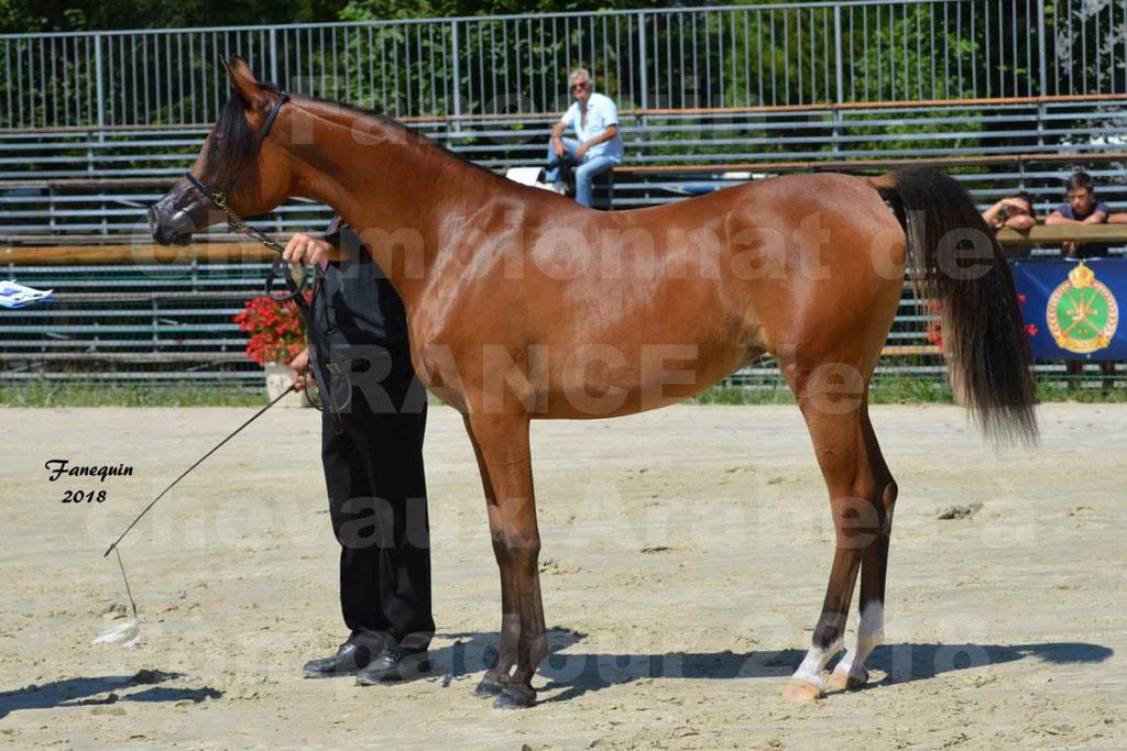 Championnat de FRANCE des chevaux Arabes à Pompadour en 2018 - SH CHARISMA - Notre Sélection - 34