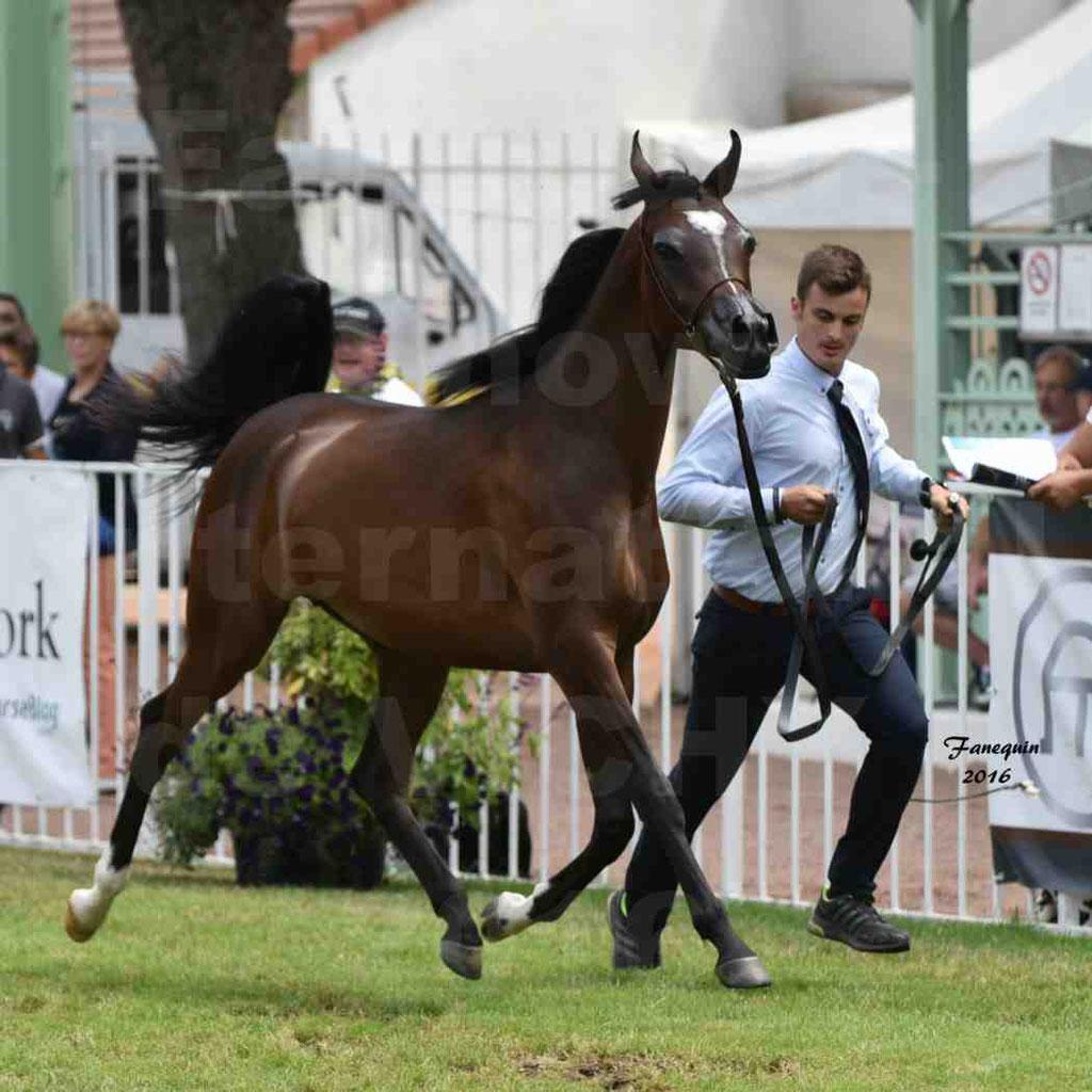International Arabian Horse Show B de VICHY 2016 - ESMAELIA AL HEVAN - Notre Sélection - 02