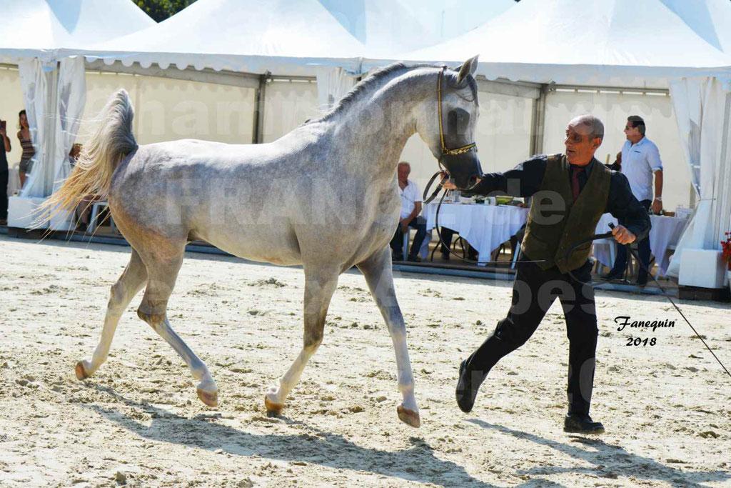 Championnat de FRANCE de chevaux Arabes à Pompadour en 2018 - SH CHAGALL - Notre Sélection - 02