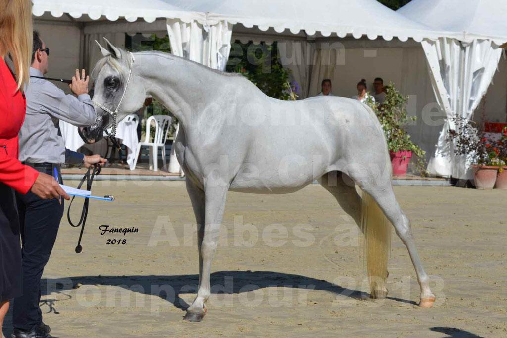 Championnat de FRANCE de chevaux Arabes à Pompadour en 2018 - ESTALIA - 36