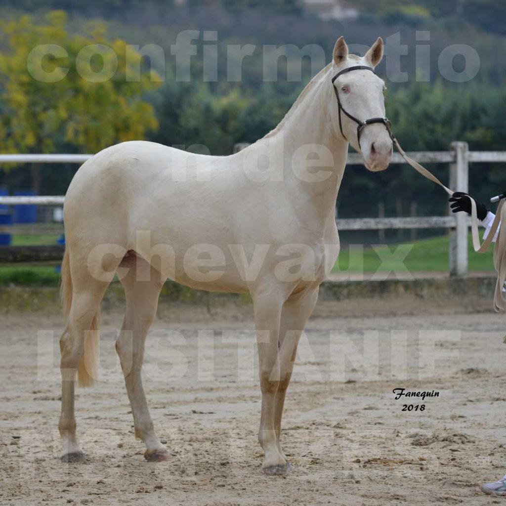 Confirmation de chevaux LUSITANIENS aux Haras d'UZES Novembre 2018 - LOLIBLOU - 36