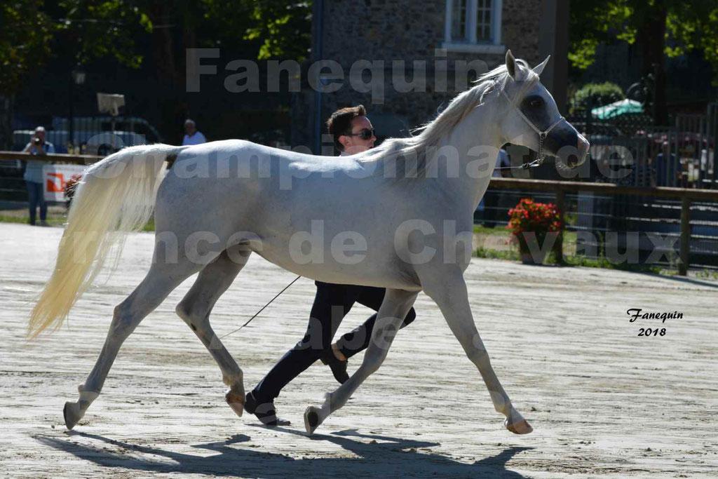 Championnat de FRANCE de chevaux Arabes à Pompadour en 2018 - ESTALIA - 28