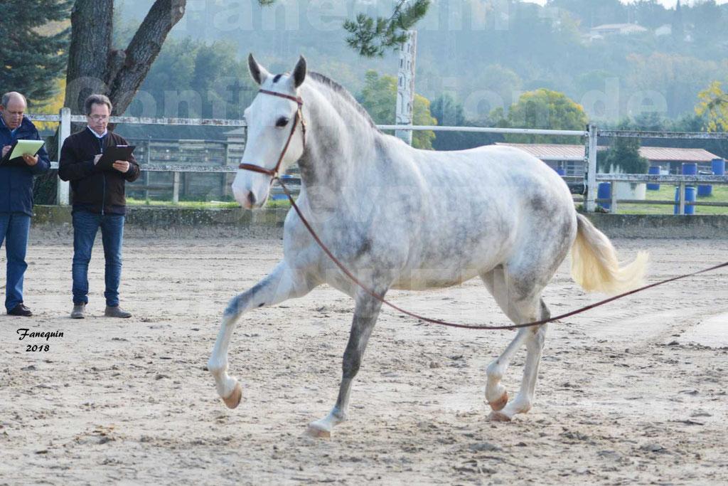 Confirmation de chevaux LUSITANIENS aux Haras d'UZES Novembre 2018 - LUTECE DU CASTEL - 12