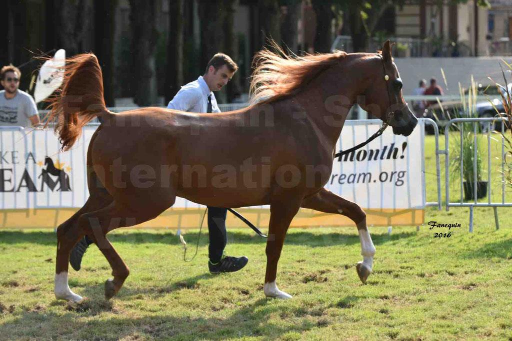 International Arabian Horse Show B de VICHY 2016 - DZHARI NUNKI - Notre Sélection - 34