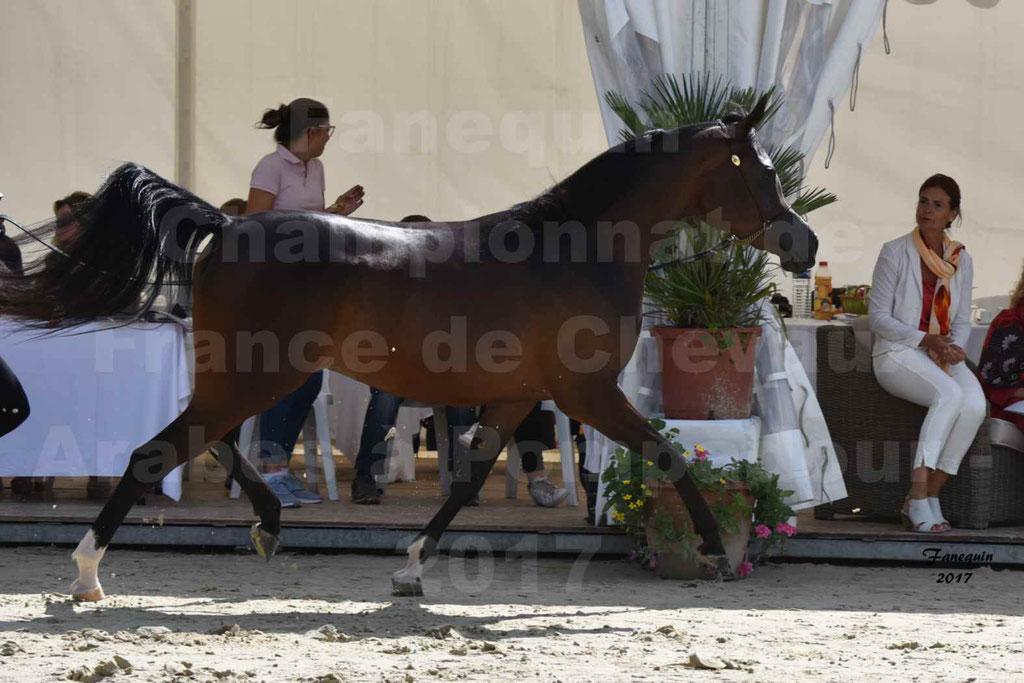 Championnat de France de chevaux Arabes à Pompadour les 19 & 20 Août 2017 - ESMAELIA AL HEVAN - 10