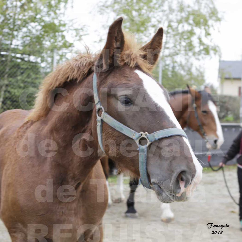 """Concours Régional """"OCCITANIE"""" Modèles et Allures de chevaux de trait à REQUISTA en 2018 - PORTRAITS - 28"""