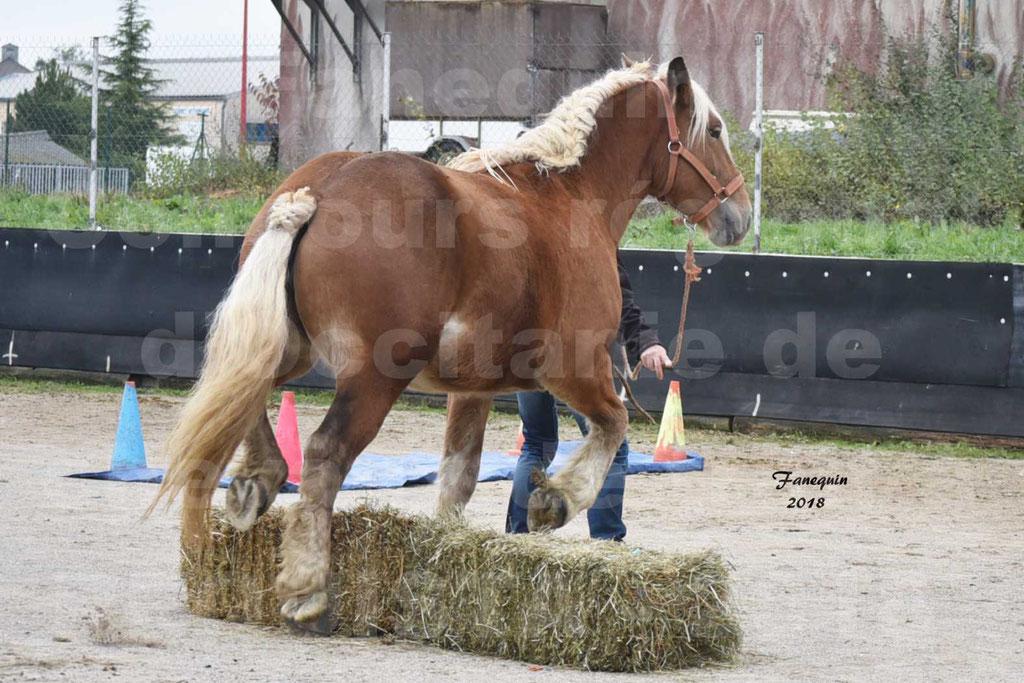 Concours Label Loisirs lors du concours Régional de chevaux de traits à REQUISTA en Octobre 2018 - 44