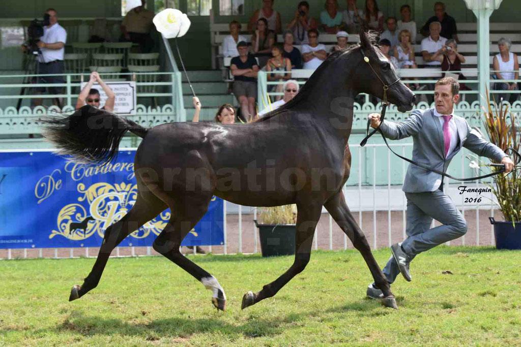 International Arabian Horse Show B de VICHY 2016 - ANNALISA ALIH - Notre Sélection - 17