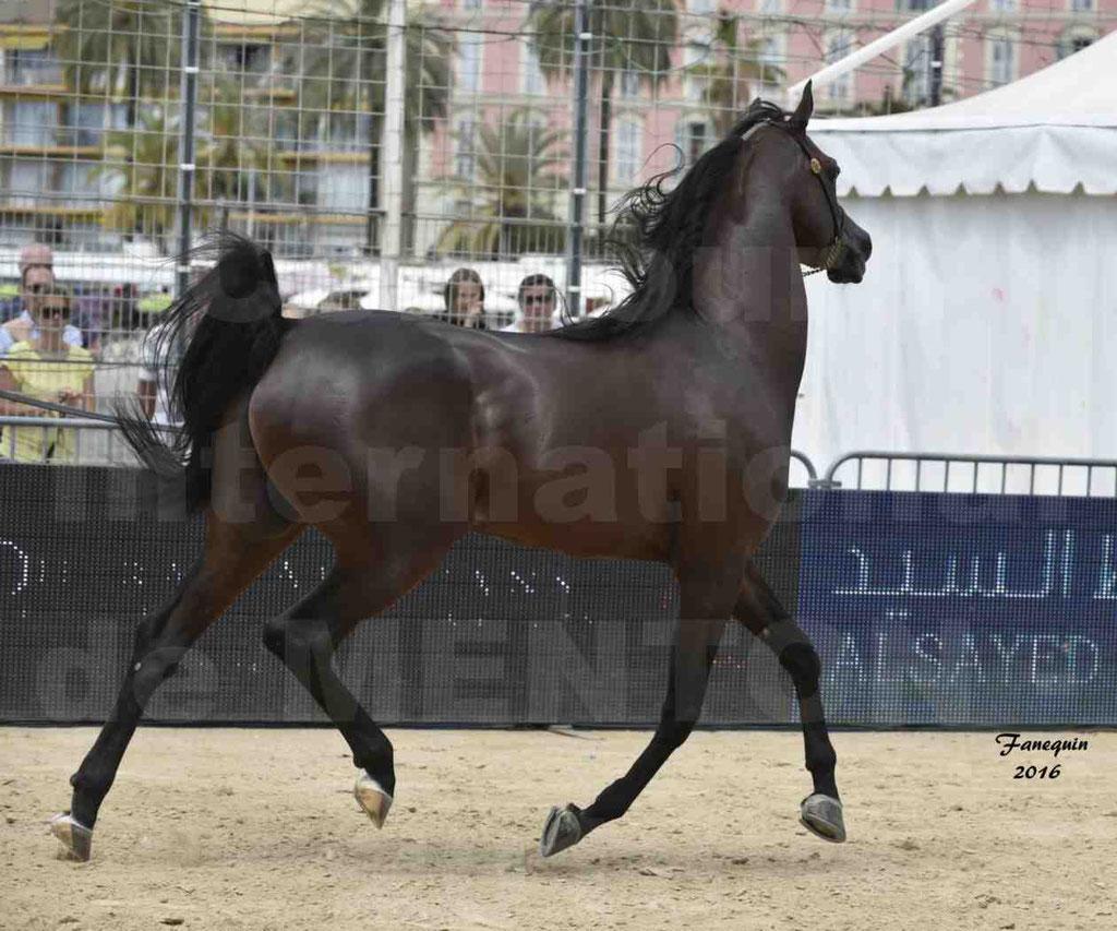 Championnat du pur-sang arabe de la Méditerranée et des pays arabes - MENTON 2016 - EKS ALIHANDRO - Notre Sélection - 25