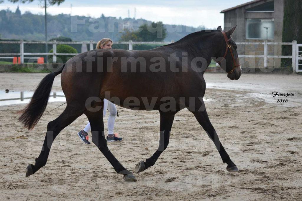 Confirmation de chevaux LUSITANIENS aux Haras d'UZES Novembre 2018 - LOUNA DU CASTEL - 05