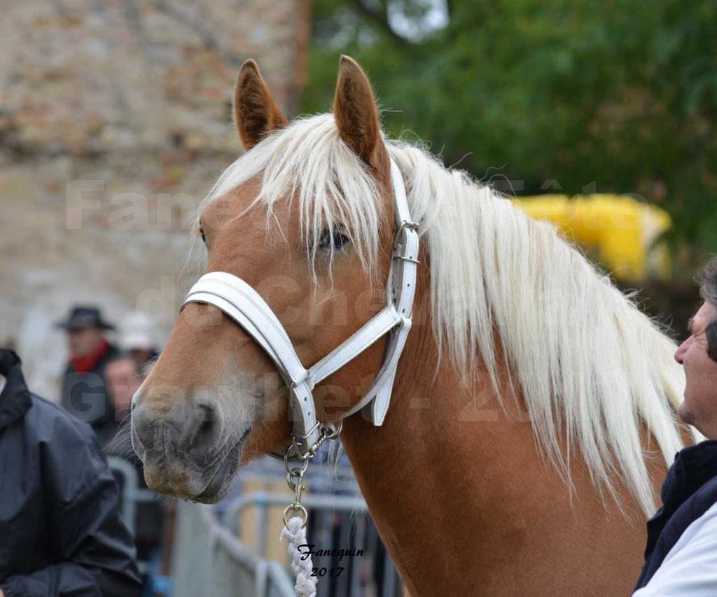 Fête du cheval à GRAULHET le 17 Septembre 2017 - Concours départemental de chevaux de trait - 1